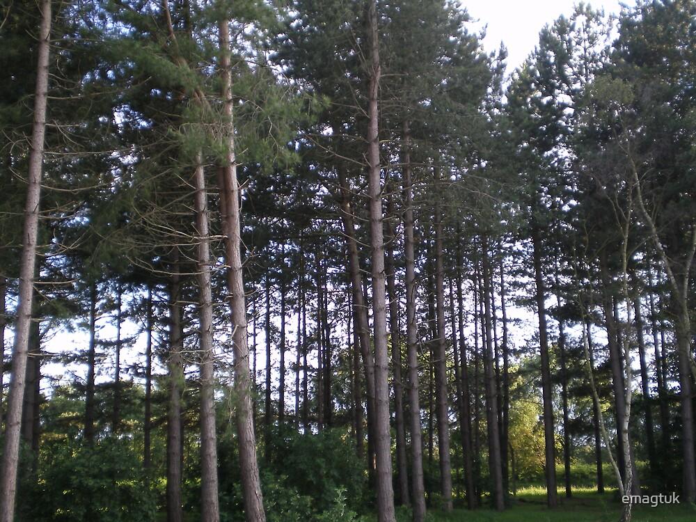 Treeline by emagtuk