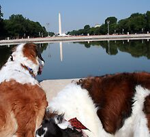 Dog's-Eye View Of Washington, DC by ericb
