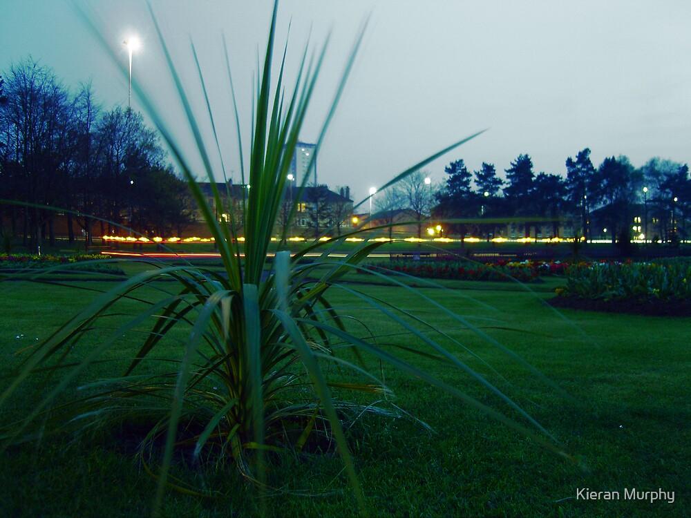 Victoria Park by Kieran Murphy