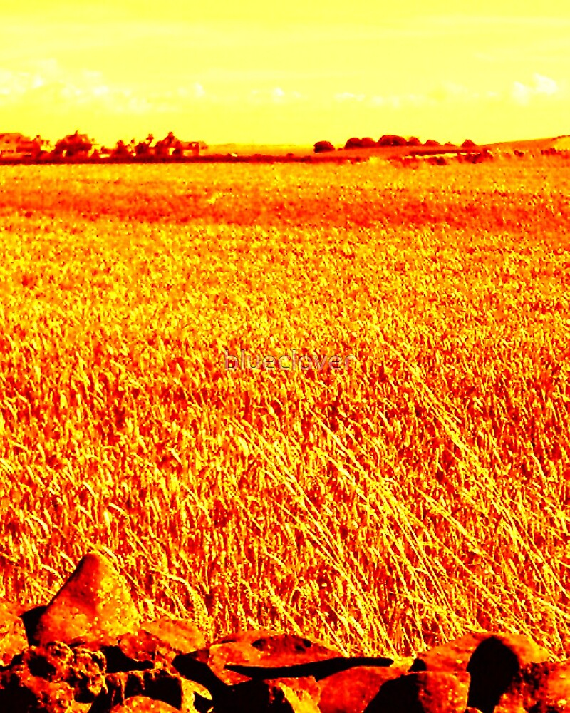 Crops Field Fiery effect by blueclover