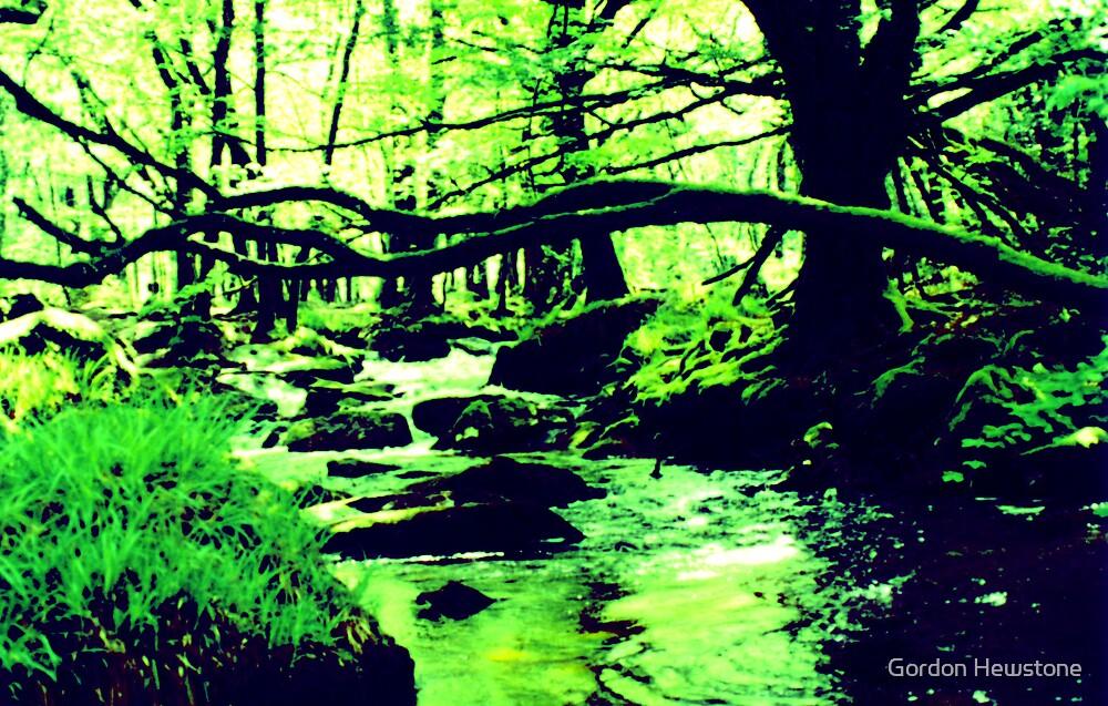 Enchanted Wood by Gordon Hewstone