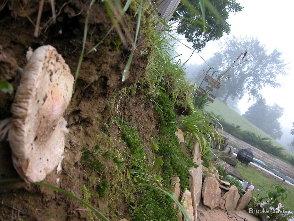 Foggy Mushroom by Brooke Davis