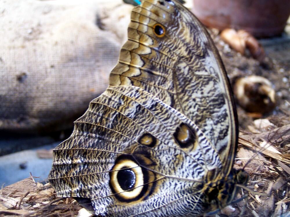 Owl Moth by dduhaime55