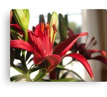 Macro Red Day Lily Canvas Print