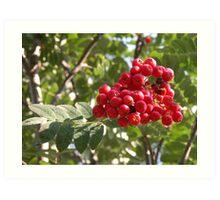 Tree Berries Art Print