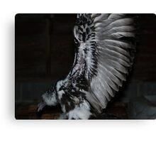 Turkey Vulture wings Canvas Print