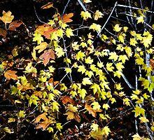 little yellows by regina