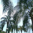 Tropical Dreams by BethTryon