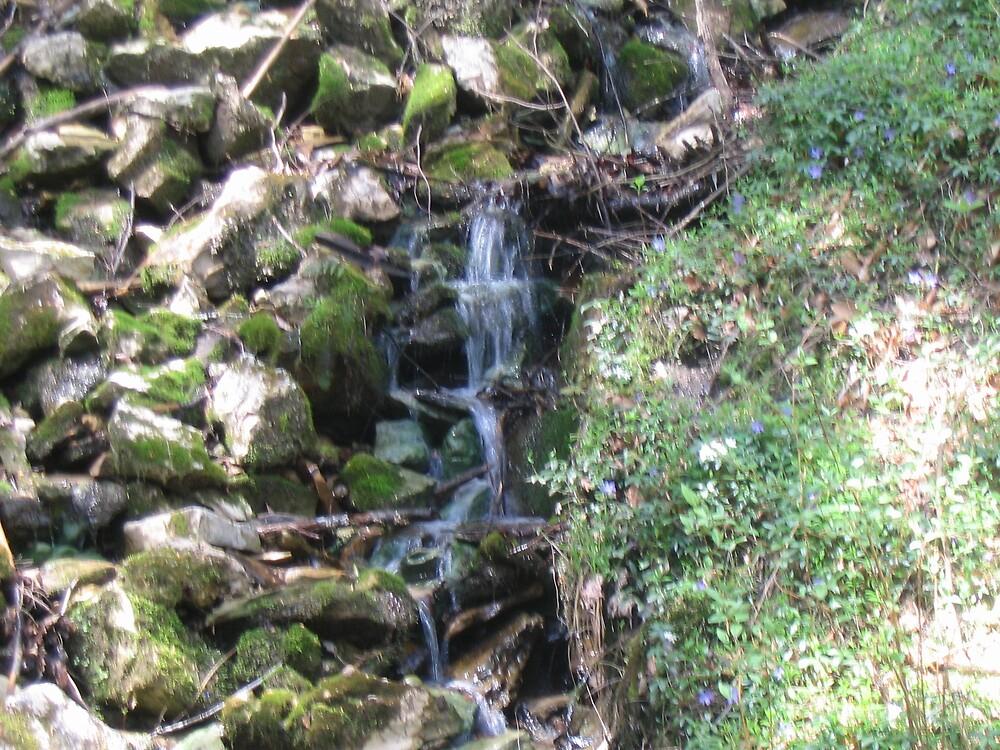 Nature's Thirst by Shane16