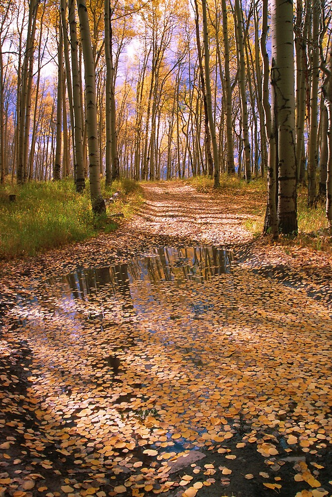 Aspen Road by cewoodruff