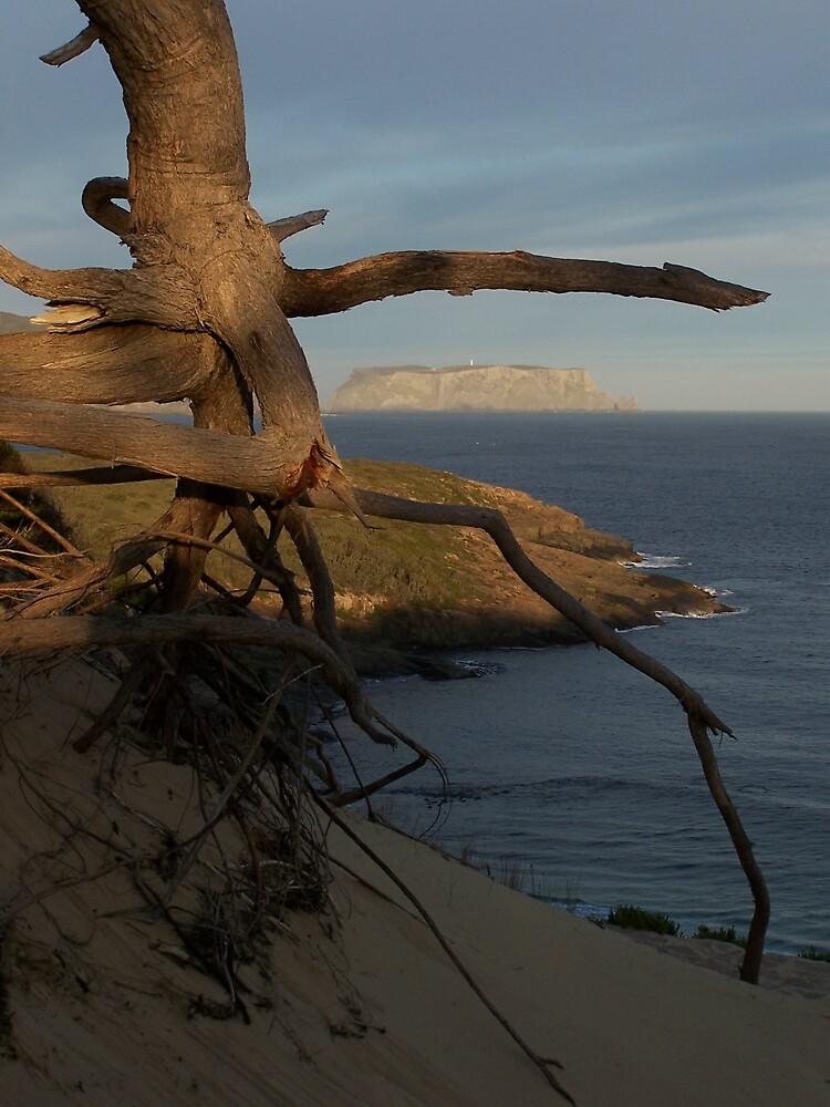 Tasman Island by Damian7