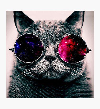 sunglasses cat                                        Photographic Print