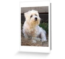 Maltese dog, my name is Kaya. Greeting Card