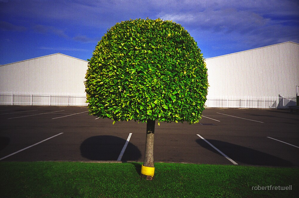 Topiary Tree by robertfretwell
