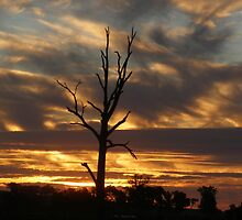 The Australian Outback by charmaine