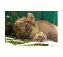 Lion cub sleeping Art Print