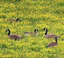 Springtime Gathering by Gary L   Suddath