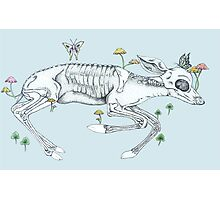 Decomposed Fawn: Woodland Animal Art Photographic Print