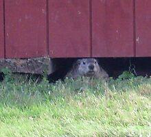 summer days of a groundhog by raggedyann