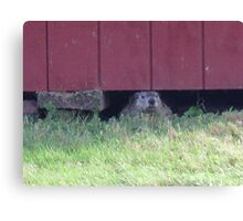 summer days of a groundhog Canvas Print