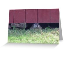 summer days of a groundhog Greeting Card