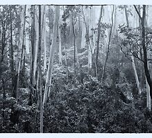 Experiments in Processing # 6 - Mount Wilson NSW - The HDR Experience by Philip Johnson