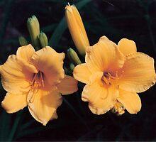Lilies by SarahFaf