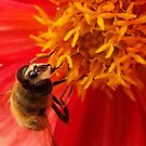 Bee on red by ElsT
