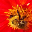 Spot the bee by ElsT