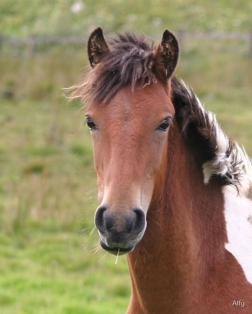 Moor Pony by Alfy