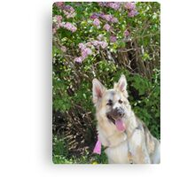 Happy Working Dog Canvas Print