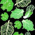 Lettuce by JadeGordon