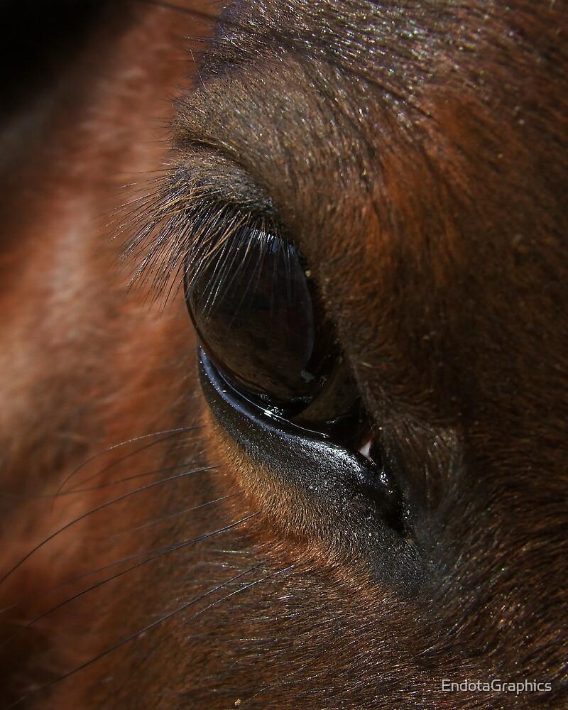 Equine Eye by EndotaGraphics