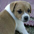 Puppy Love by Julie Just