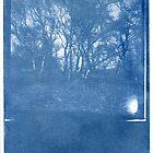 Cyanotype #1 by John Tuffen