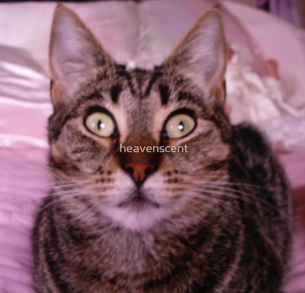 Bright eyed Kitty by heavenscent