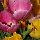 Tammi's Tulips by Robert Khan