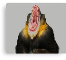 Monkey Bored Canvas Print