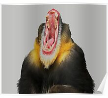 Monkey Bored Poster
