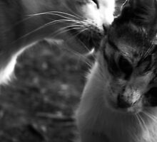 LoveCats by Gkoletis
