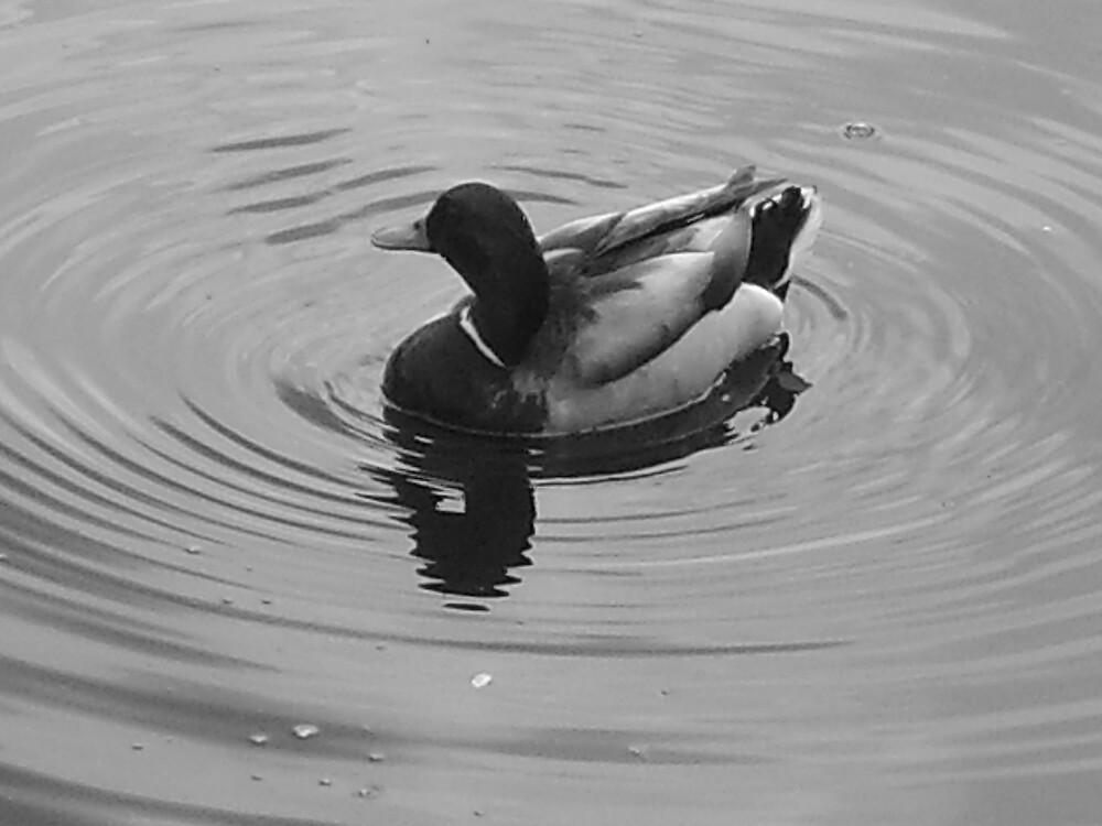 duck by amyhellier