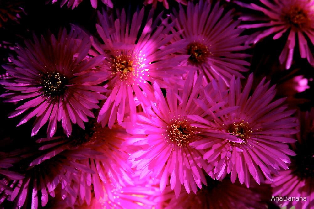 pink light by AnaBanana