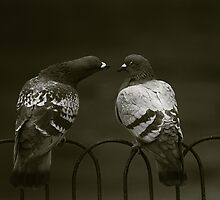 Lovebirds by Nando MacHado