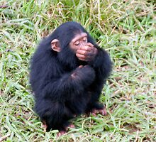 Baby Chimp by Michael Clark