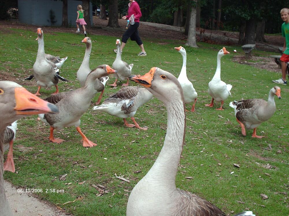 Graceful Ducks by peggyprescott
