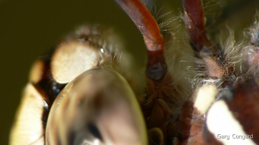 Dragonfly feeding by Gary  Conyard