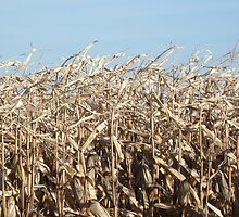 Corn for Harvest by Bill Knapp