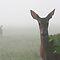 Animals in the Fog