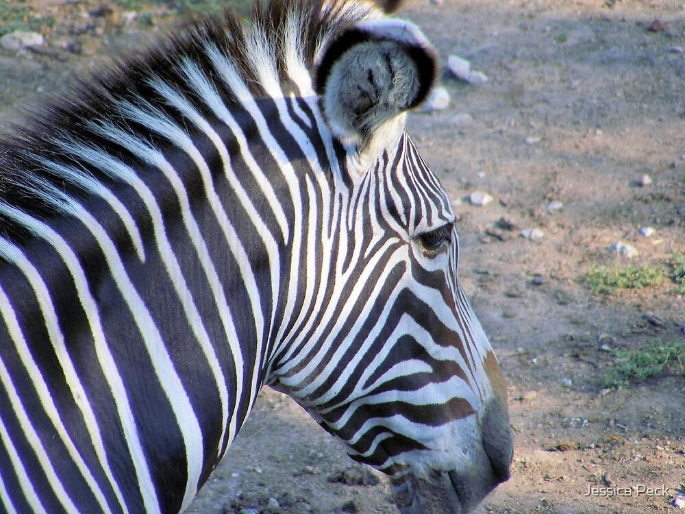 Zebra Head by Jessica Peck