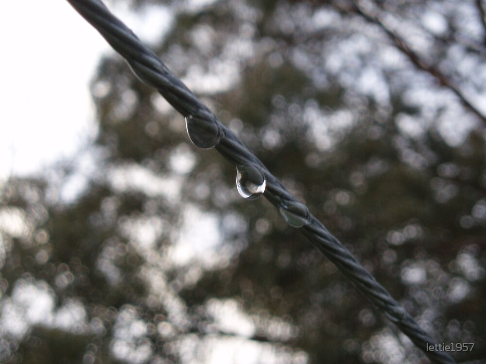 Droplets of rain on washing line  by lettie1957